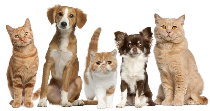 Pet Air Pet Shipping