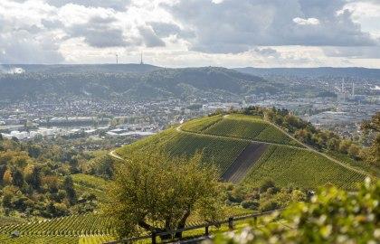 vineyards-stuttgart